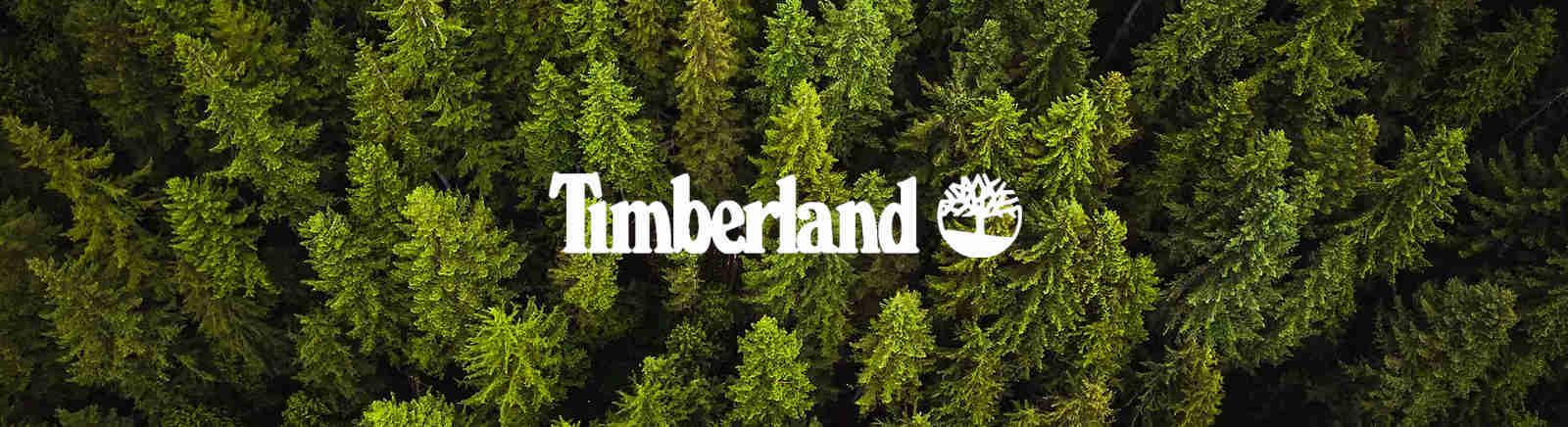 Timberland Schuhe kaufen im GISY Online-Shop